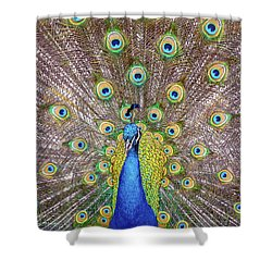 Showing Off..... Shower Curtain
