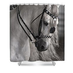 Showtime Shower Curtain by Wes and Dotty Weber
