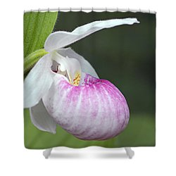 Showy Ladyslipper Shower Curtain