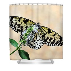 Showy Nymph Shower Curtain by Debbie Green