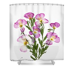 Showy-primrose Shower Curtain