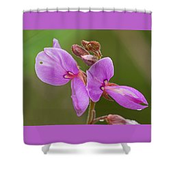 Showy Tick Trefoil Shower Curtain