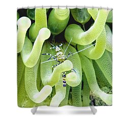 Shrimp And The Anemone Shower Curtain