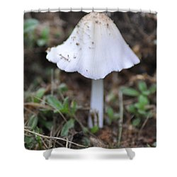 Shroom Shower Curtain by Bill Cannon