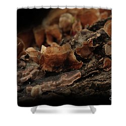 Shower Curtain featuring the photograph Shrooms by Kim Henderson