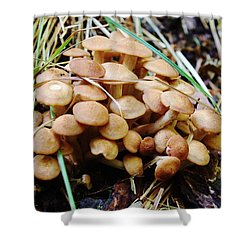 'shrooms Shower Curtain