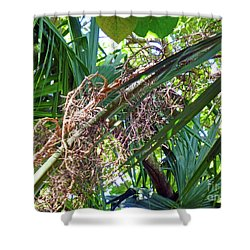 Shower Curtain featuring the photograph Shrub In Trees Contrast by Francesca Mackenney