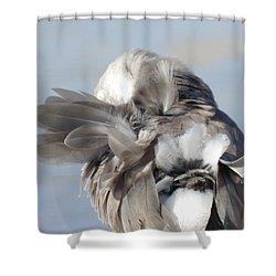 Shuffling Shower Curtain