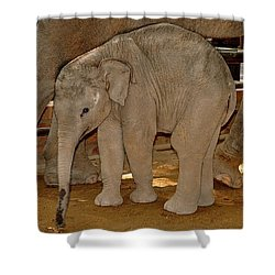 Shy Baby Elephant Shower Curtain