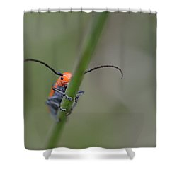Shy Beetle Shower Curtain