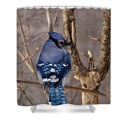 Shy Blue Jay  Shower Curtain by David Porteus
