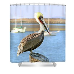 Shy Brown Pelican Shower Curtain