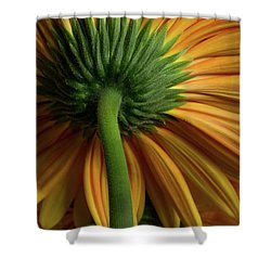 Shy Daisies Shower Curtain