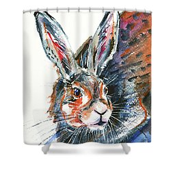 Shower Curtain featuring the painting Shy Hare by Zaira Dzhaubaeva