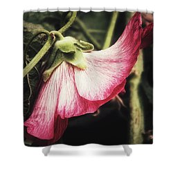 Shower Curtain featuring the photograph Shy Hollyhock by Karen Stahlros