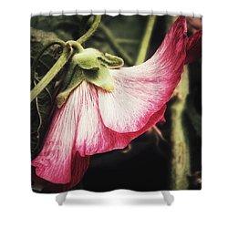 Shy Hollyhock Shower Curtain by Karen Stahlros