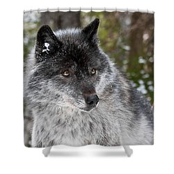 Shy II Shower Curtain