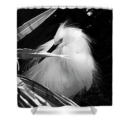 Shy Snowy Egret Shower Curtain