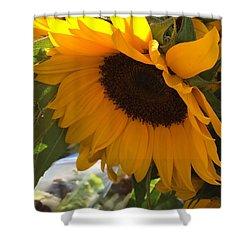 Shy Sunflower Shower Curtain by Nance Larson