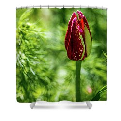 Shy Tulip Shower Curtain