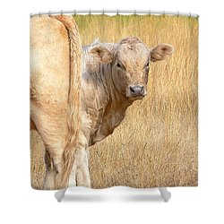 Shy White Calf Shower Curtain by Jennie Marie Schell