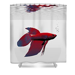 Siamese Fighting Fish Shower Curtain by Corey Ford