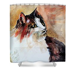 Siberian Forest Cat Shower Curtain by Khalid Saeed