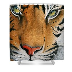 Shower Curtain featuring the painting Siberian Gold by Mike Brown