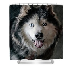 Siberian Husky Shower Curtain