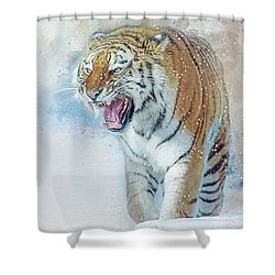 Siberian Tiger In Snow Shower Curtain by Brian Tarr