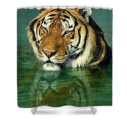 Siberian Tiger Reflection Wildlife Rescue Shower Curtain by Dave Welling