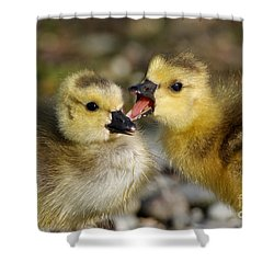 Sibling Love - Baby Canada Geese Shower Curtain