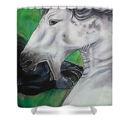 Shower Curtain featuring the painting Sibling Rivalry by Thomas Lupari