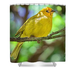 Sicalis Flaveola Shower Curtain