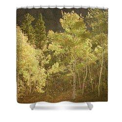 Shower Curtain featuring the photograph Side-lit Aspens - Autumn In Eastern Sierra California by Ram Vasudev