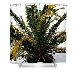 Sideshow Palm Shower Curtain