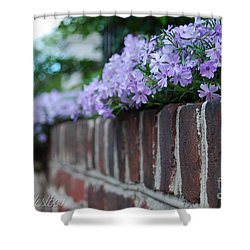 Shower Curtain featuring the photograph Sidewalk Art by Linda Mesibov