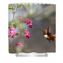 Sign Of Spring 3 Shower Curtain by Randy Hall
