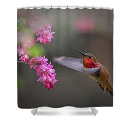 Sign Of Spring Shower Curtain by Randy Hall