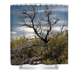 Shower Curtain featuring the photograph Signs Of Life After The Fire by Joe Kozlowski