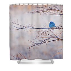 Signs Of Spring Shower Curtain by John De Bord