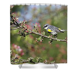 Shower Curtain featuring the photograph Signs Of Spring by Stephen Flint