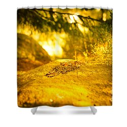 Silence And Peace Under The Spruce Trees Shower Curtain