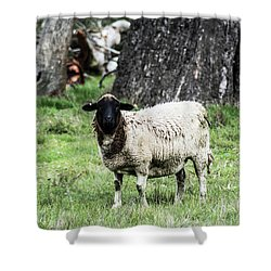 Silence Of The Umm Sheep 1 Shower Curtain