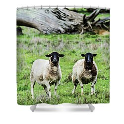 Silence Of The Umm Sheep 2  Shower Curtain