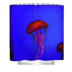 Shower Curtain featuring the photograph Silent Jellies by Jeff Folger