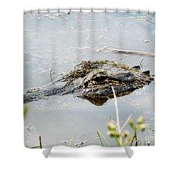 Silent Predator Shower Curtain by Audrey Van Tassell