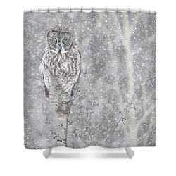 Shower Curtain featuring the photograph Silent Snowfall Portrait by Everet Regal