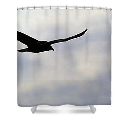 Silhouette Of A Turkey Vulture  Shower Curtain by Erin Paul Donovan