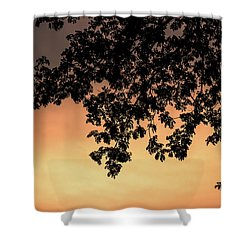 Shower Curtain featuring the photograph Silhouette Tree In The Dawn Sky by Jingjits Photography